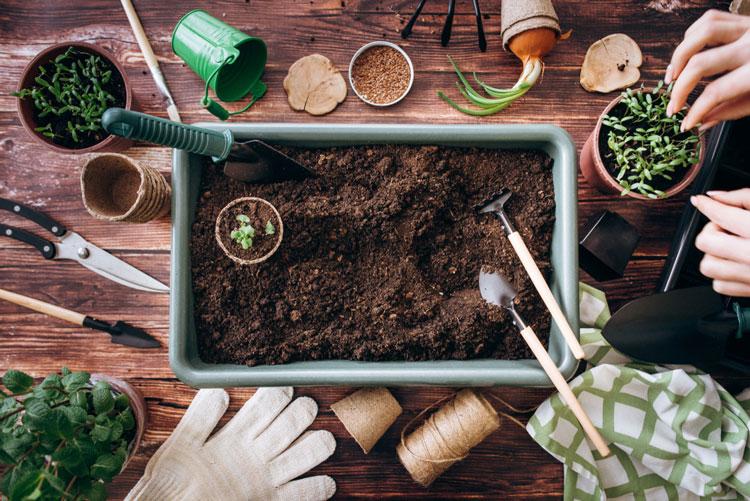 Bạn cần chuẩn bị đất và các dụng cụ trồng